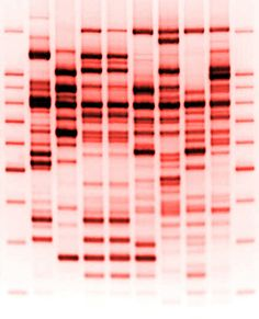 DNA  That's perfect to analyse!