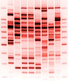 DNA RedHiRes ~ quiero esto en un cuadro