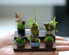 super mini plants