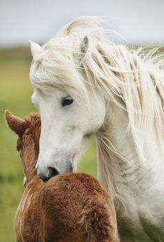 Mare and foal  #horse #horses #mare #foal #babyhorse #babyhorses #horselover       http://www.islandcowgirl.com/