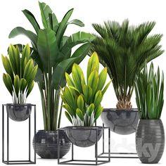 models: Indoor - Collection of plants. Indoor Garden, Garden Pots, Indoor Plants, Outdoor Gardens, House Plants Decor, Plant Decor, Plantas Indoor, Green Plants, Houseplants