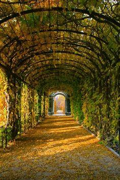 Tree Tunnel, Schonbrunn Gardens, Vienna, Austria