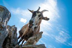Streichelzoo in Örglwirts Ferienwelt Goats, Animals, Image, Petting Zoo, Playground, Adventure, Animales, Animaux, Animal