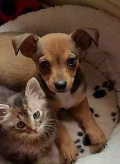 SOS Cães e Gatos do Brasil - Nordeste - Comunidade - Google+
