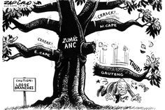 Zapiro: Beware loose branches, Mr President - Mail & Guardian