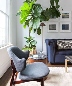 22 Modern Living Room Design Ideas | Add some life to your space with a statement-making plant like designer Grant Gibson does with this larger-than-life Monstera in a living room. Bonus tip: mix things up by incorporating furniture in the same color family, but in different shades, like he does here with the blue sofa and chair. #realsimple #livingroomdecor #livingroomideas #details #homedecorinspo 3 Piece Living Room Set, New Living Room, Living Room Sets, Living Room Modern, Living Room Chairs, Living Room Designs, Living Room Furniture, Living Room Decor, Small Living