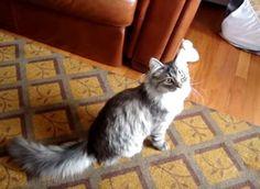【動画】ボールを取りに壁を登る忍者猫 http://skaihahiroi.blog.fc2.com/blog-entry-853.html…