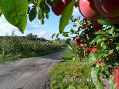 Orchards near Rochester NY