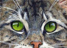 Pencil Painting, Cat Face, Art Oil, Pet Birds, Colored Pencils, Dog Cat, Faces, Kid, Paintings