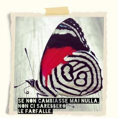 Le farfalle...