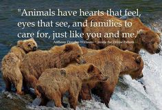 """Animals have hearts that feel, eyes that see, and families to care for, just like you and me."" - Anthony Douglas Williams (Inside The Divine Pattern)"