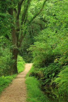 Footpath & Leat Luxulyan Valley (Cornwall England) by Mike Crowle Beautiful World, Beautiful Places, Forest Path, Walk In The Woods, Jolie Photo, English Countryside, Pathways, Amazing Nature, Nature Photos