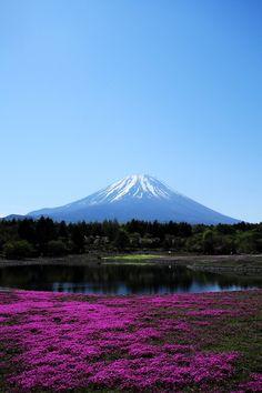 富士芝桜まつりby (U3K-Y)