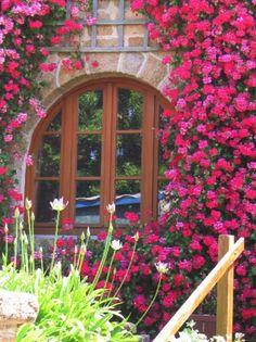 Climbing Roses..beautiful