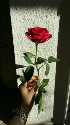 Cute Love Pictures, Rose Pictures, Emoji Wallpaper, Flower Wallpaper, Red Flowers, Red Roses, Hands Holding Flowers, Aesthetic Roses, Girl Photo Poses