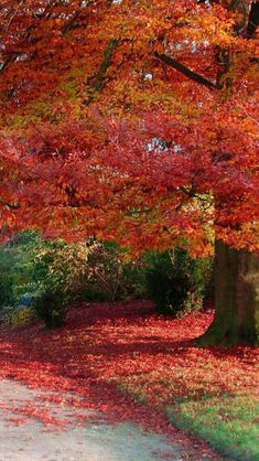 Colors of Fall - #USTrailer