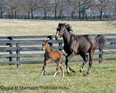 meet the new mom - rachel alexandra, photo by anne eberhardt and is available to sale at the blood-horse