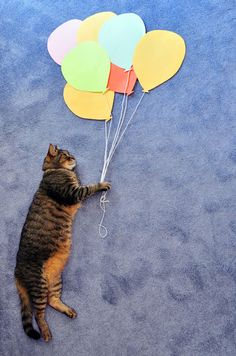 """""""Fluffy's Aquatic and Aerial Adventures"""" • by Theresa Knudson"""