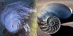 spirale dna disegno - Cerca con Google