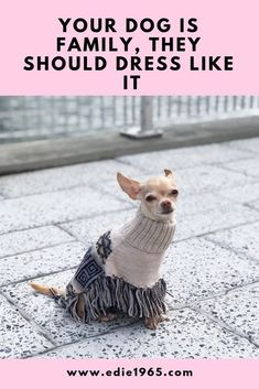 Dogs are part of the family! Dress them like family in modern clothing that compliments your life, and theirs.  Dog clothing, dog sweaters, small dog clothing, chihuahua clothing, cute chihuahuas, chihuahua puppy, modern dog clothing, hipster dog clothing, dog poncho, dog coats, dog jackets