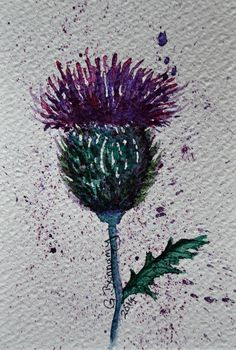 Watercolour of a Scottish thistle Purple and green painted by Gill Bonnamy