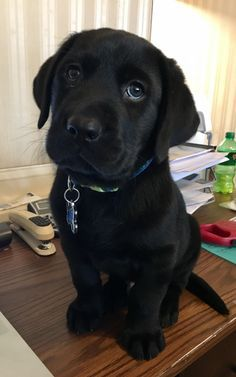Things that make you go AWW! Like puppies, bunnies, babies, and so on. Super Cute Puppies, Cute Dogs And Puppies, I Love Dogs, Pet Dogs, Dog Cat, Corgi Puppies, Weiner Dogs, Labrador Puppies, Doggies