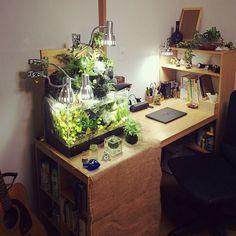 Desk with gorgeous aquarium/terrarium Aquarium Terrarium, Home Aquarium, Aquarium Design, Garden Terrarium, Aquarium Fish Tank, Reef Aquarium, Indoor Water Garden, Aquascaping, Reptile Room