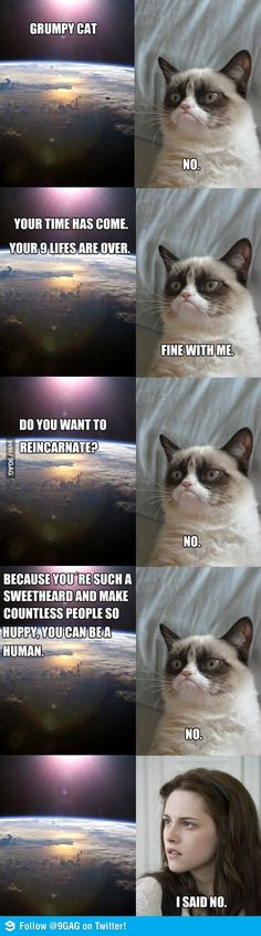 Grumpy cat death and rebirth