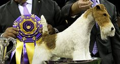 Sky's the Limit | TIME For Kids The Westminster Kennel Club names a new top dog: http://www.timeforkids.com/news/skys-limit/145386