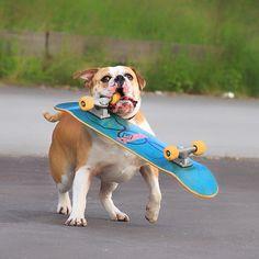 WEBSTA @ insomnia_maja - Uzywana deska - 10€. Radosc dziecka - bezcenne 😄🐶💨💛 #connex_star #skateboard #continentalbulldog #flatnosedogsociety #bullyofinstagram #happydog #igbulldogs_worldwide