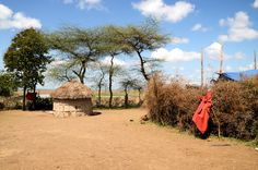 Tanzania, Masai village Tanzania, Africa, Plants, Travel, Fotografia, Viajes, Traveling, Flora, Plant