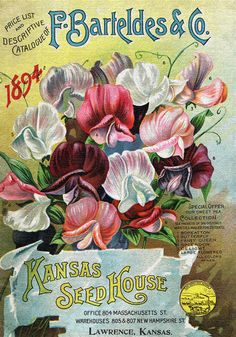 20x28 Seed Art on Canvas Gallery Wrapped Vintage Print via Etsy