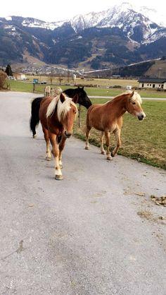 Cow, Horses, Animals, Animales, Animaux, Horse, Words, Animal, Animais