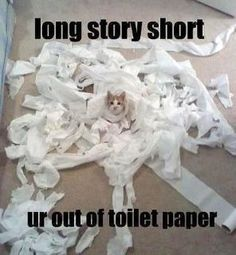 Cat vs toilet paper happened today. I'm pretty sure cat won.