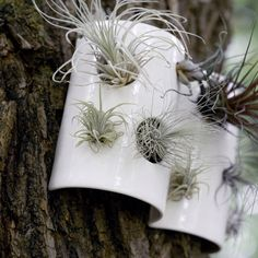 air plant holders from pigeon toe ceramics.