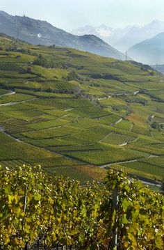 Vignobles, Sierre-Salgesch Excursion, Wallis, All Over The World, Switzerland, Vines, Mountains, City, Places, Pictures