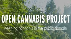 What Is The Open Cannabis Project?