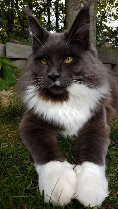 Shared > Beautiful Cats Breeds ;-)