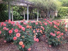 Birmingham Botanical Rose Garden