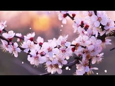 "Peaceful Music, Relaxing Music, Instrumental Music ""Peaceful Spring Moment"" By Tim Janis My instrumental music can help you find deep relaxation, relieve anx. Christmas Tale, Christmas Movies, Deep Relaxation, Relaxing Music, Heart And Mind, Piano Music, Finding Peace, Peace And Love, Cool Photos"