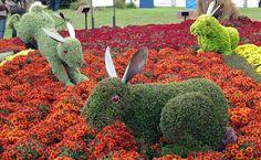 A group of enchanting rabbits frolic in the Garden. Atlanta Botanical Gardens