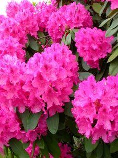 10 Best Plants for Your Pacific Northwest Garden