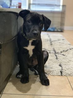 Things that make you go AWW! Like puppies, bunnies, babies, and so on. Lab Pitbull Mix Puppy, Boxer Mix Puppies, Cute Dogs And Puppies, Pet Dogs, Doggies, Dog Cat, Boxador Puppies, Pit Bull, Cute Animals