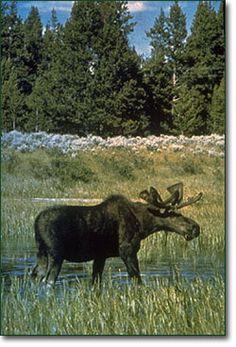yellowstone national park   Yellowstone National Park Lodging & Old Faithful Inn
