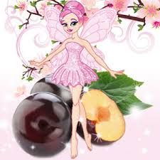 Image result for the sugar plum fairy