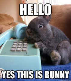 hello yes this is bunny -