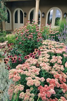 A drought tolerant courtyard garden designed by Sana Fe Permaculture features sedums, echinacea, Russian sage and other tough plants.