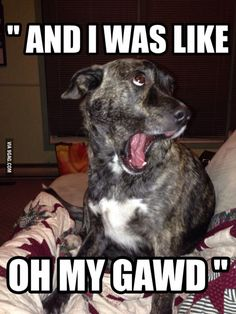 Tierischer humor, funny dog humor, funny dog faces, funny dog with captions, Humor Animal, Funny Animal Jokes, Funny Animal Photos, Funny Dog Memes, Funny Cats And Dogs, Funny Pictures With Captions, Animal Quotes, Cute Funny Animals, Funny Relatable Memes
