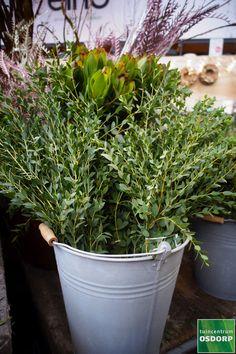 Met kerstgroen, zoals eucalyptus- en dennentakken maak je van jouw kersttafel eenvoudig iets moois! Op onze DIY afdeling vind je een ruim aanbod kerstgroen, kerststukjes en meer! Plants, Plant, Planets