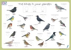 Bird Identification | ... introduce children to the joy of bird watching and identification with